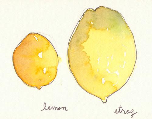 sketch11.26.11_lemonetrog