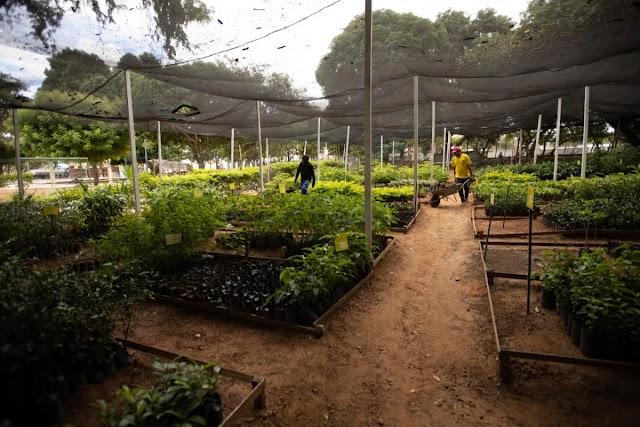 Juazeiro: Semasp distribui mudas nativas e frutíferas gratuitamente