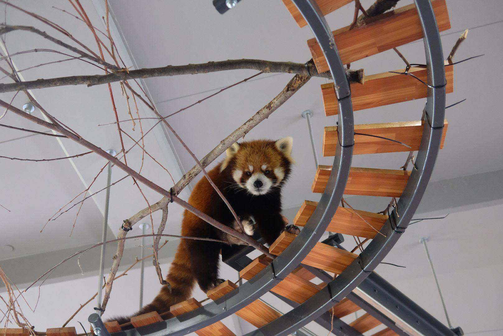 photo Maruyama Zoo Sapporo.jpg