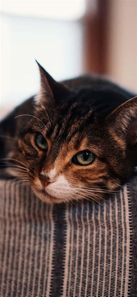 beautiful cat wallpapers   iphone  cat  shirt store