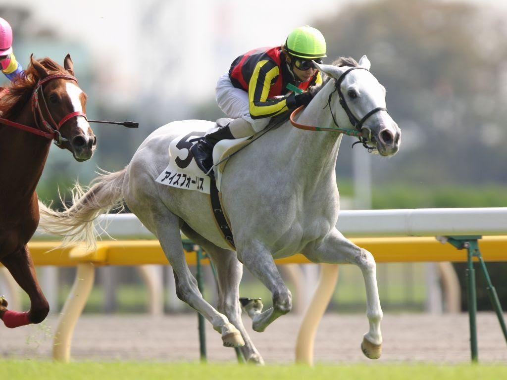 画像 かわいい芦毛の現役競走馬たちスプリンターズs