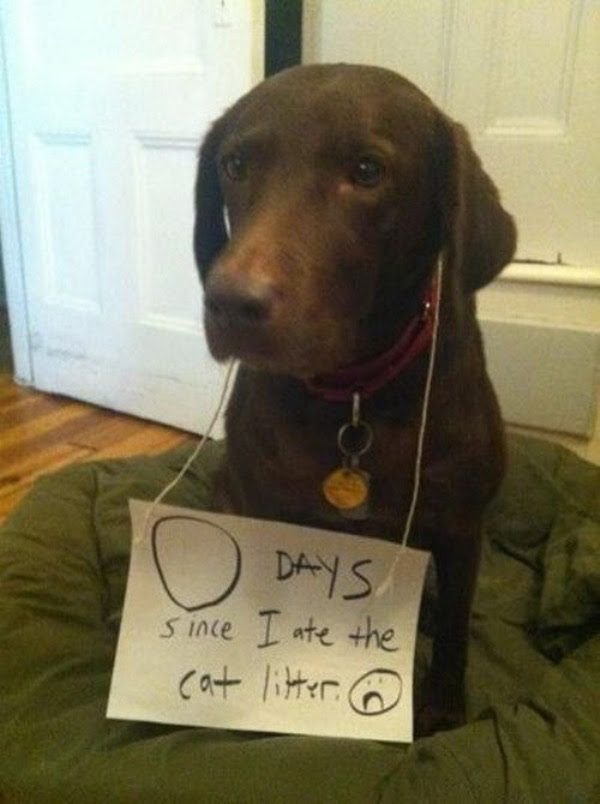 guilty-dogs-25