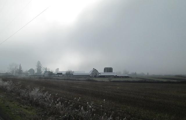 Foggy farm complex