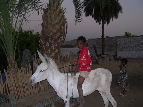 Nubian Kid on Donkey