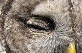 Close up of eyelid feathers