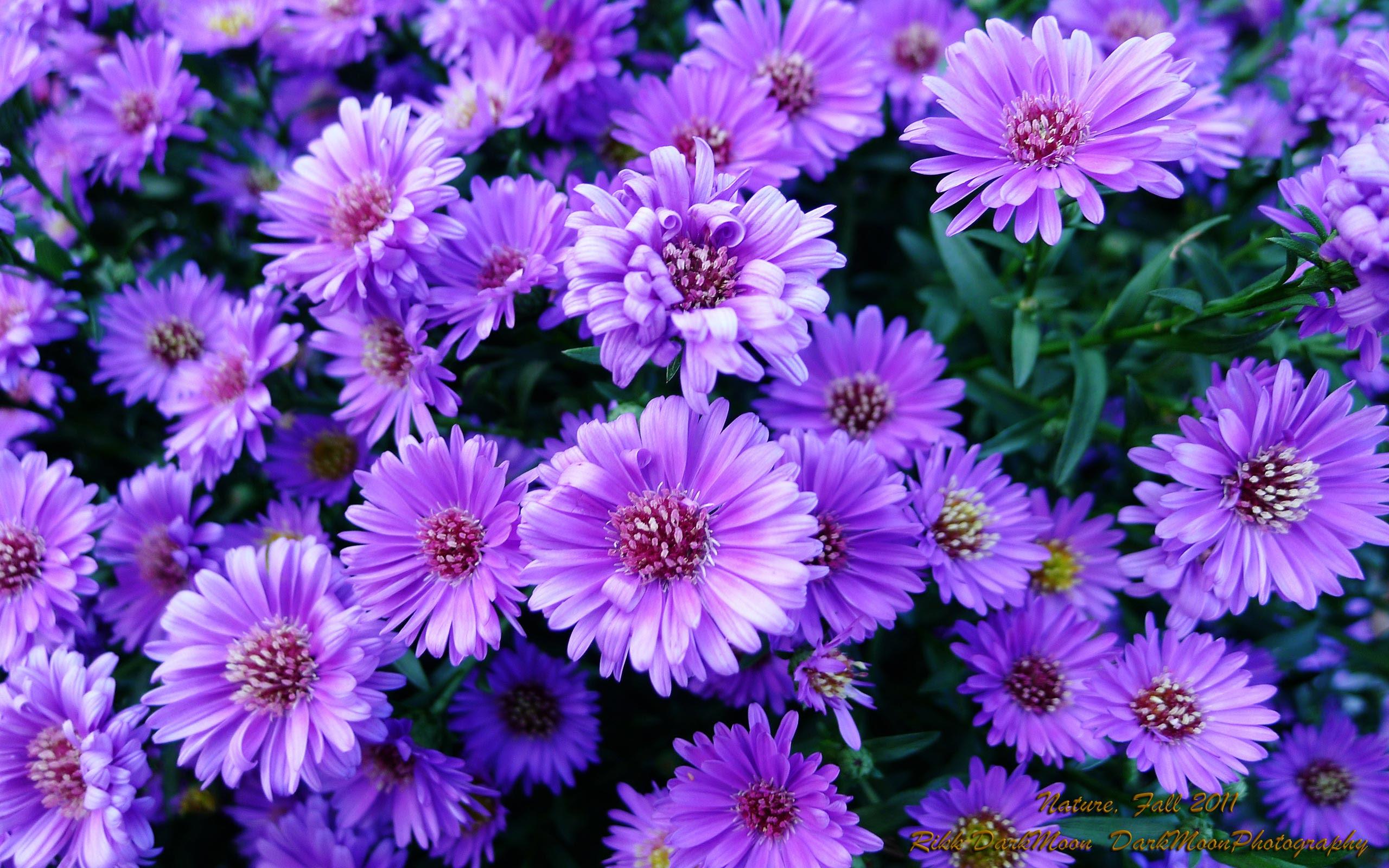 Free Purple Flowers Download Free Clip Art Free Clip Art On