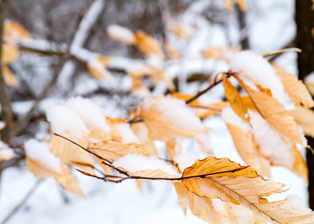 Leaves and Snow IV