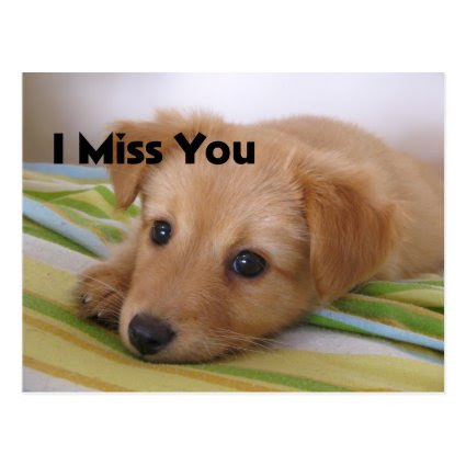 Cute Puppy Dog Look Post Card