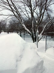 Backyard_2311
