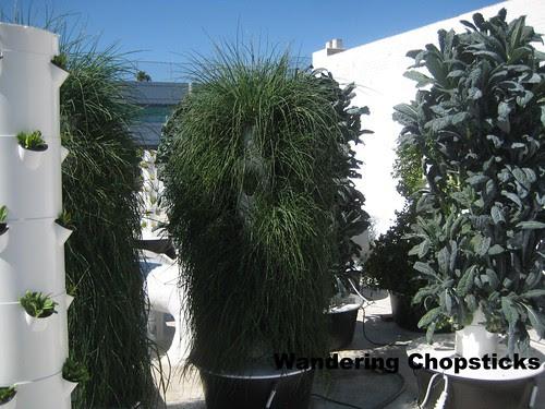 Rooftop Garden - Playa Restaurant - Los Angeles 8