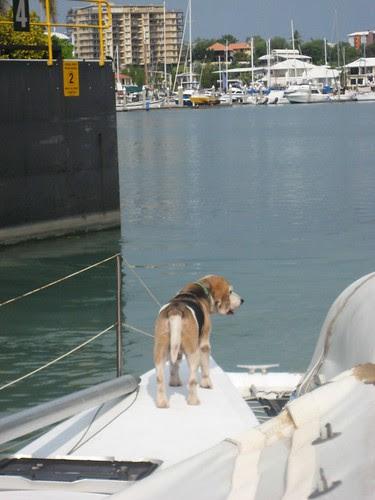 Rentry to the Marina