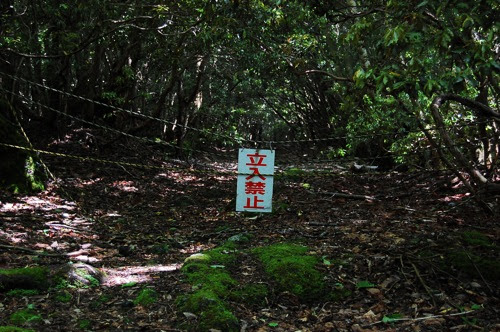 1-Aokigahara-Forest–Mount-Fuji-Japan