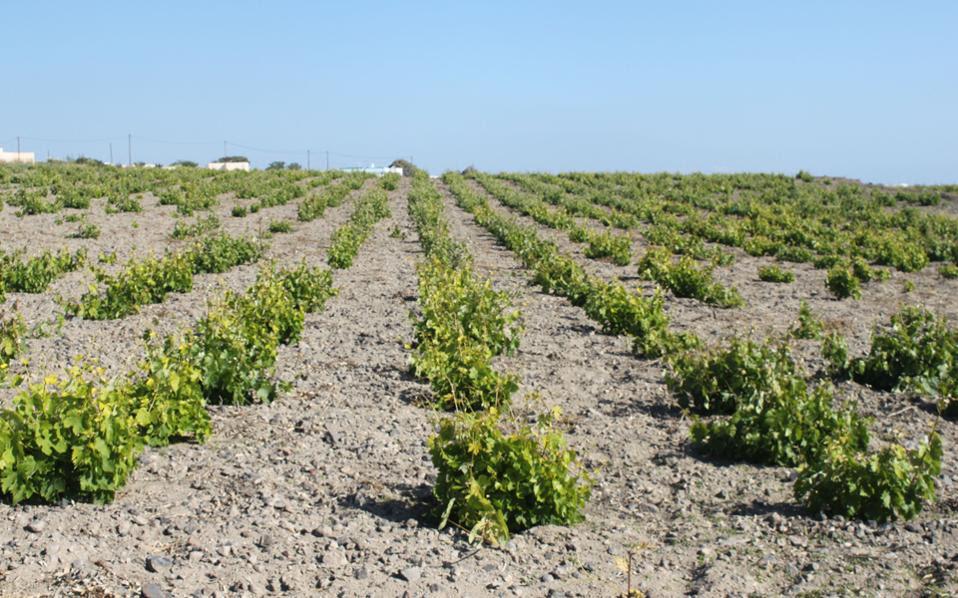 Για τους αγροτικούς φορείς, οι δράσεις θα πρέπει να επικεντρώνονται στην εφαρμογή των μέτρων που εισήχθησαν στο πλαίσιο της πρόσφατης μεταρρύθμισης της ΚΓΠ και σε συγκεκριμένα θέματα που αφορούν πολιτικές πρωτοβουλίες που αναλήφθηκαν μετά τη μεταρρύθμιση της ΚΓΠ, όπως η «βιολογική γεωργία».