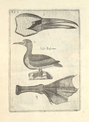 Scotia illustrata by Robert Sibbald 1684