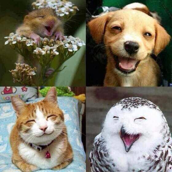 90 Gambar Hewan Senyum Lucu HD Terbaik