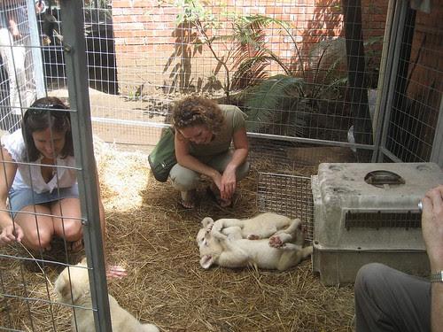 cute cubs and girls el zoo
