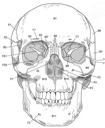 skull axial skeleton labeling worksheet_622951