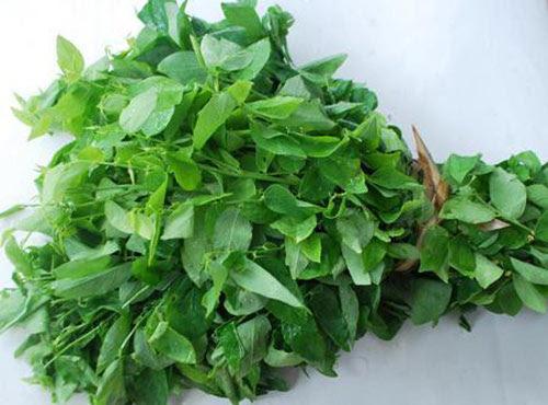 Rau ngót không chỉ là là loại rau ăn giàu chất dinh dưỡng với hàm lượng protein cao
