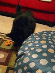 Huggy Bear investigating the tuffet