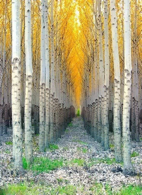 trees, 5