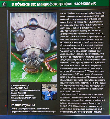 a wet  beetle  Ukrainian Photographer Magazine IMG_5508 copy