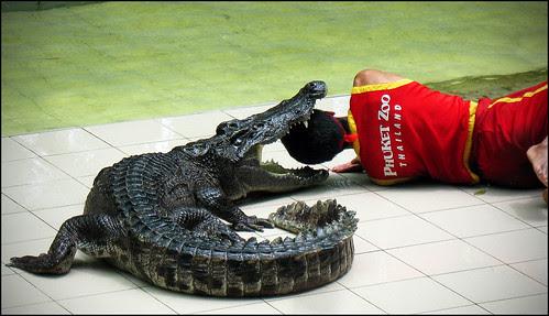 Crocodile at Phuket Zoo