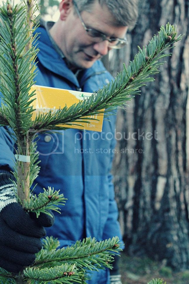 photo treefound_zpsb06349c4.jpg