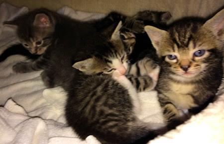 A basketful of romping, snoozing cuteness