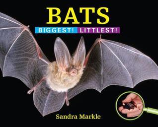 Bats: Biggest! Littlest!