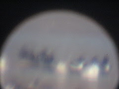 one of my really awful digiscope shots