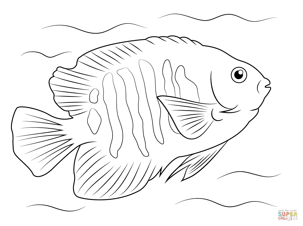 Flame Angelfish coloring page | Free Printable Coloring Pages