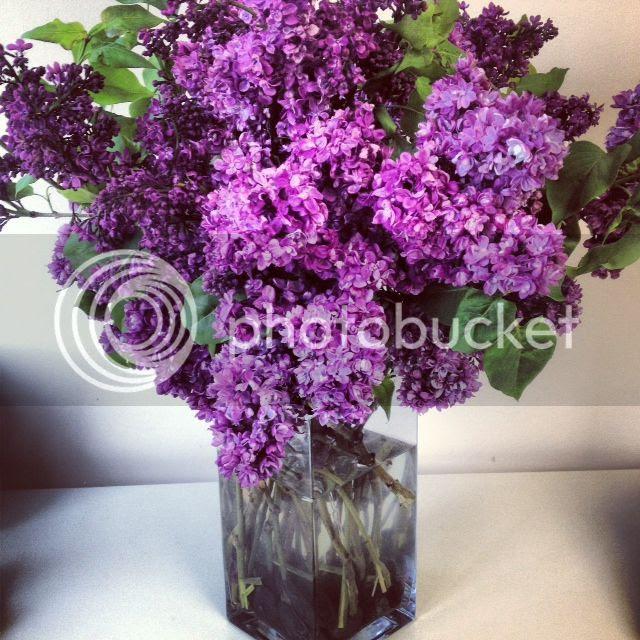 photo lilacs.jpg