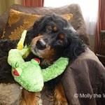Molly - Molly the Wally