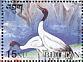 Black-necked Crane Grus nigricollis