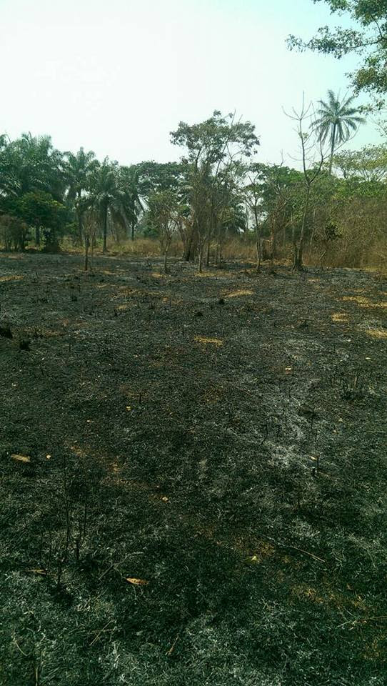 Fulani Herdsmen Burn A Man's Farm In Ekiti After Being Warned (Photos)