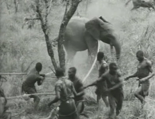 Elephant%20Capture-9 by bucklesw1