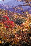 Autumn - Along Newfound Gap Road