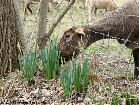 Spring Has Sprung 4