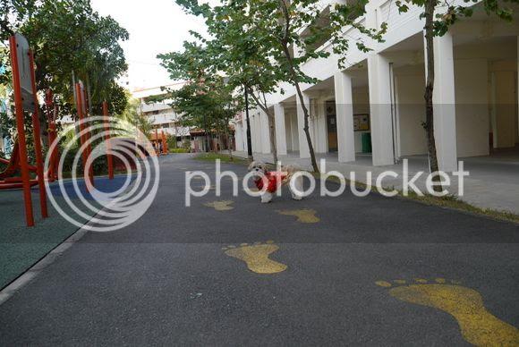 photo P1000174_zpsc3f6f447.jpg