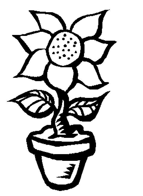 Agaclarnet Ayçiçeği