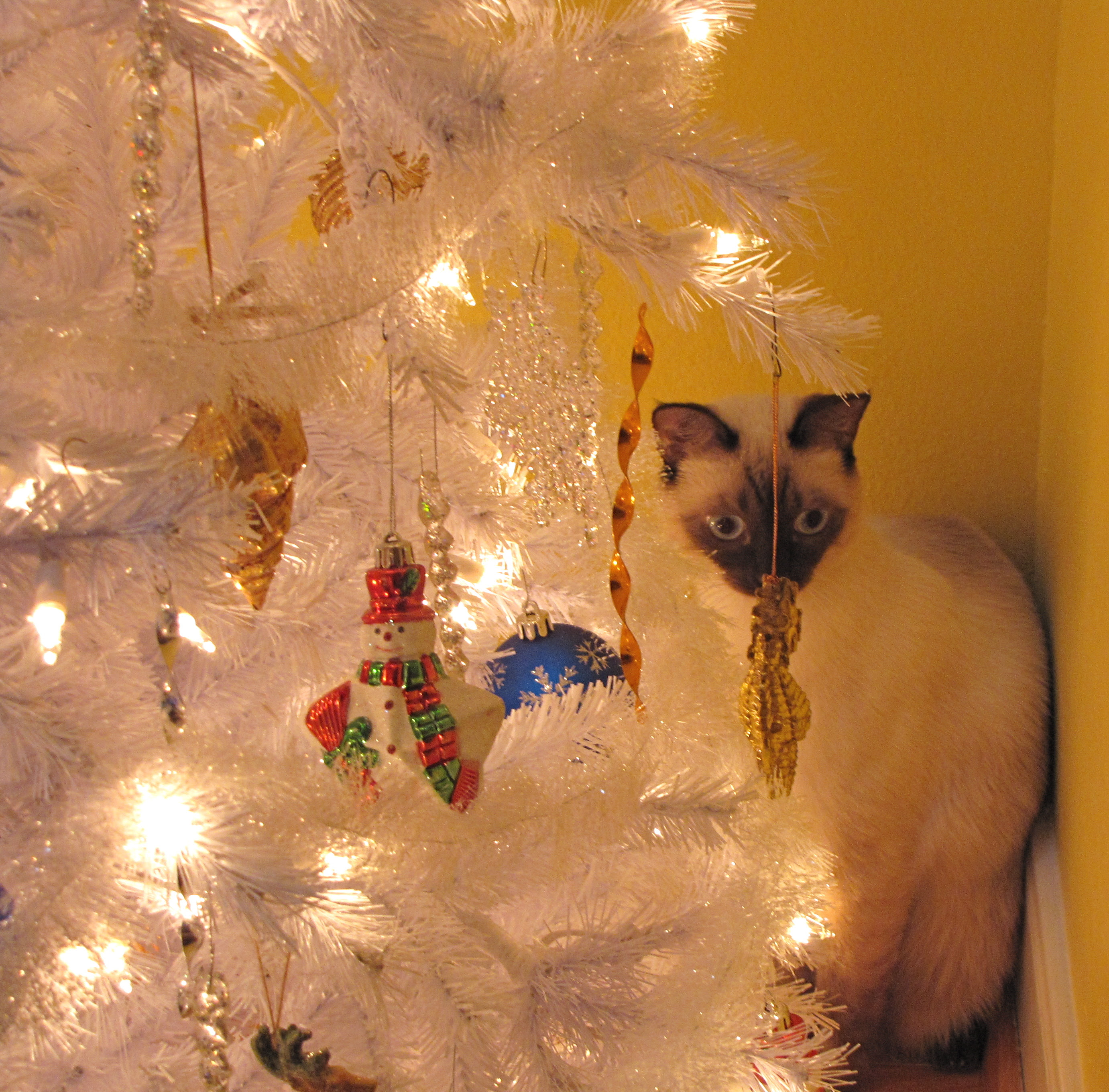 Kitty Under the Christmas Tree