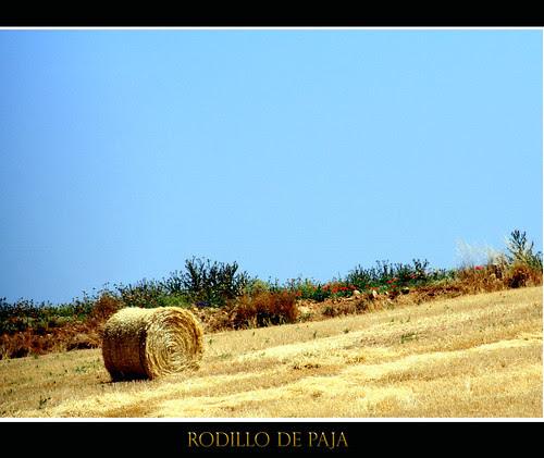 campo castellano