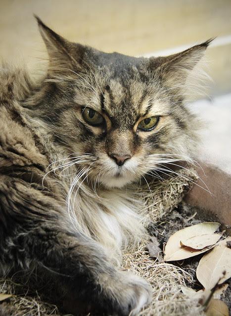 Isla - Gallery Cat