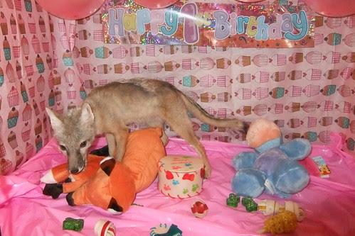 Valla's 1st birthday