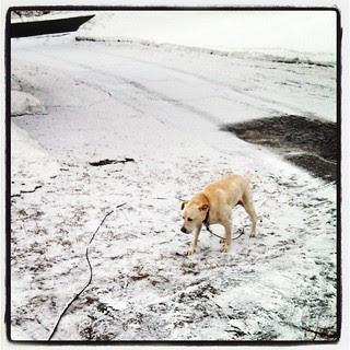 Seriously Mother Nature? #winterwontend #snow #newengland #winter #dogstagram #instadog #labmix