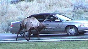 Fun times at Yellowstone