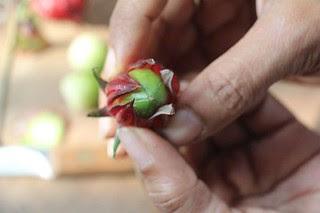 Roselle fruit+calyces