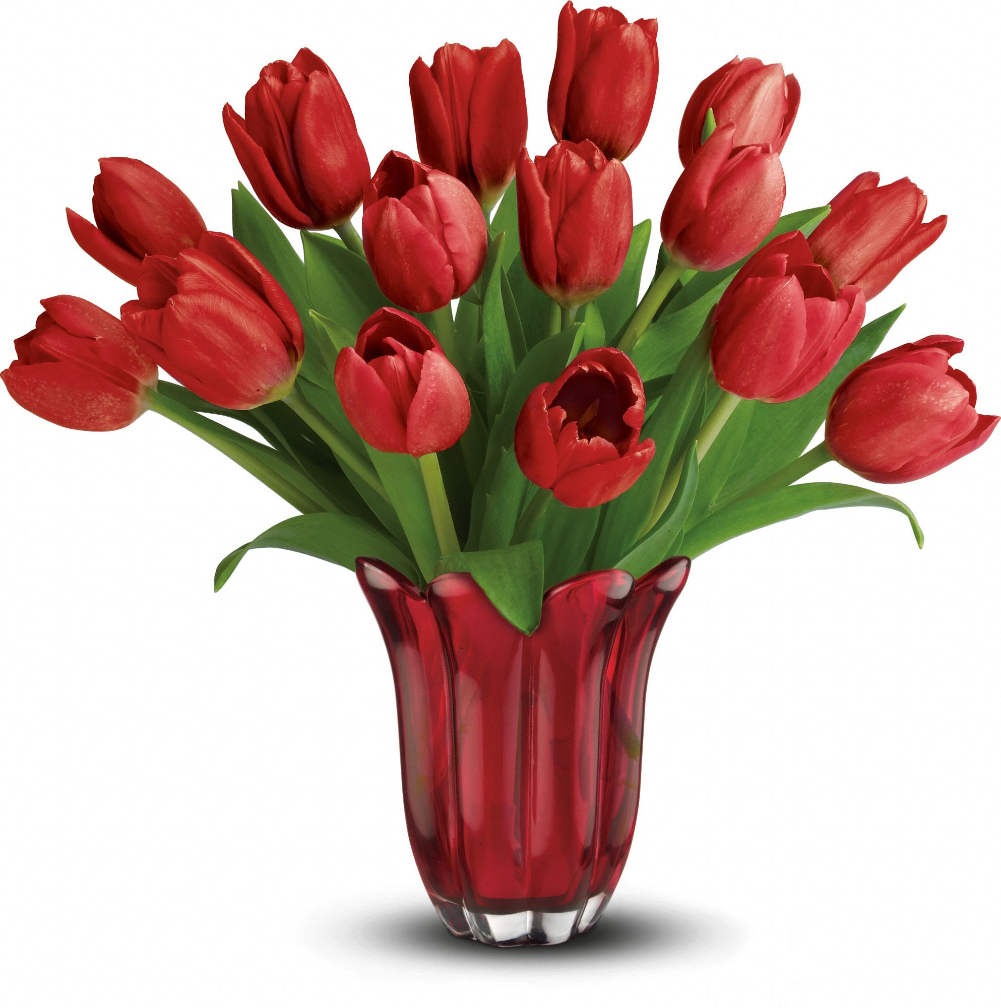 Red tulips express \u0026quot;Perfect Love\u0026quot; for Valentine\u002639;s Day