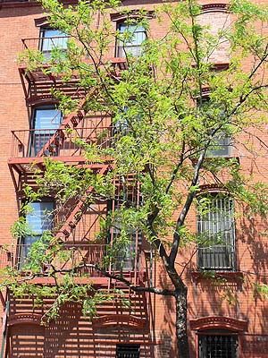 arbre devant escaliers immeubles.jpg