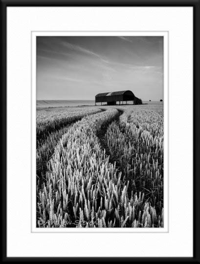 Soon Be Harvest (asp100-4911)
